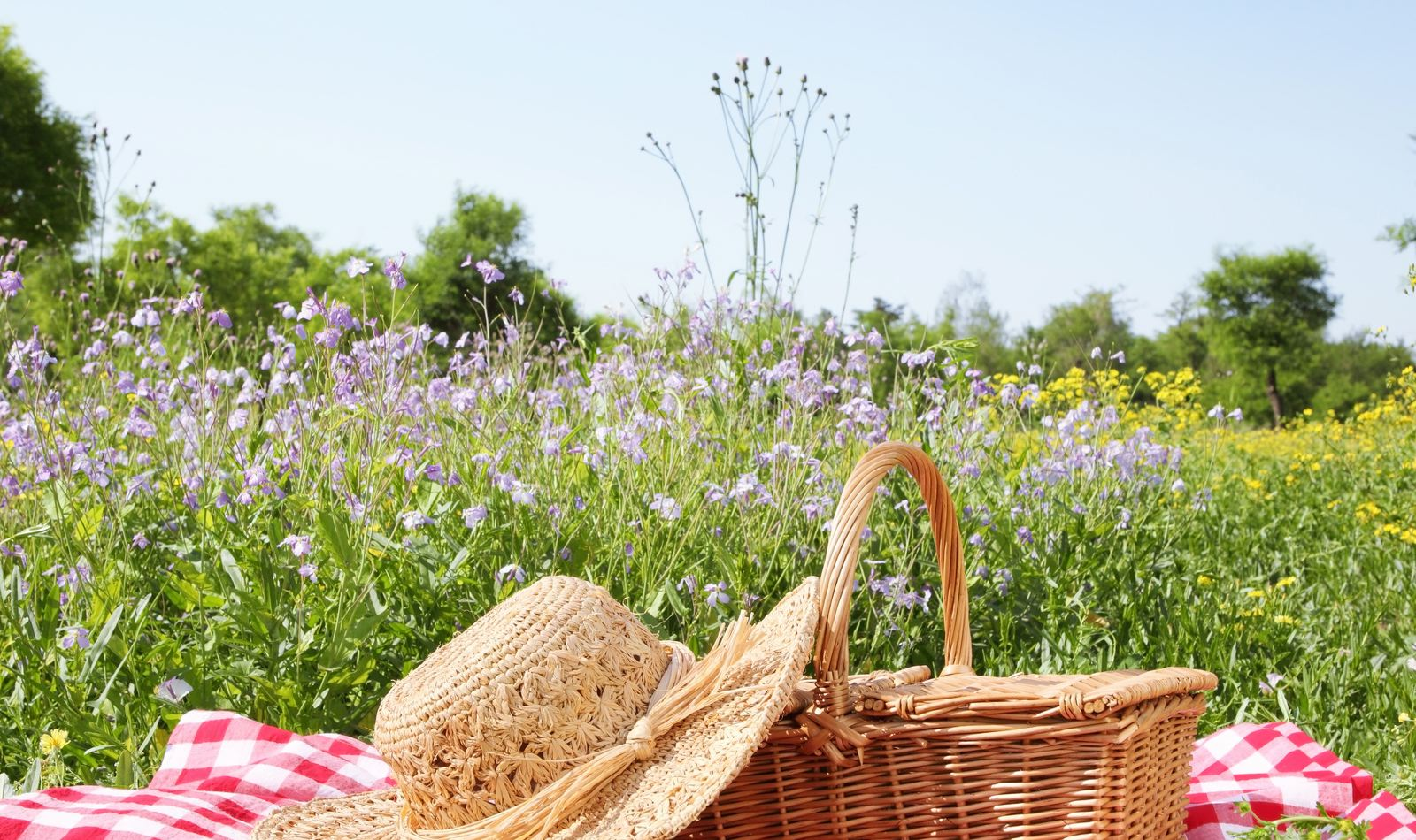 picnic-in-the-country